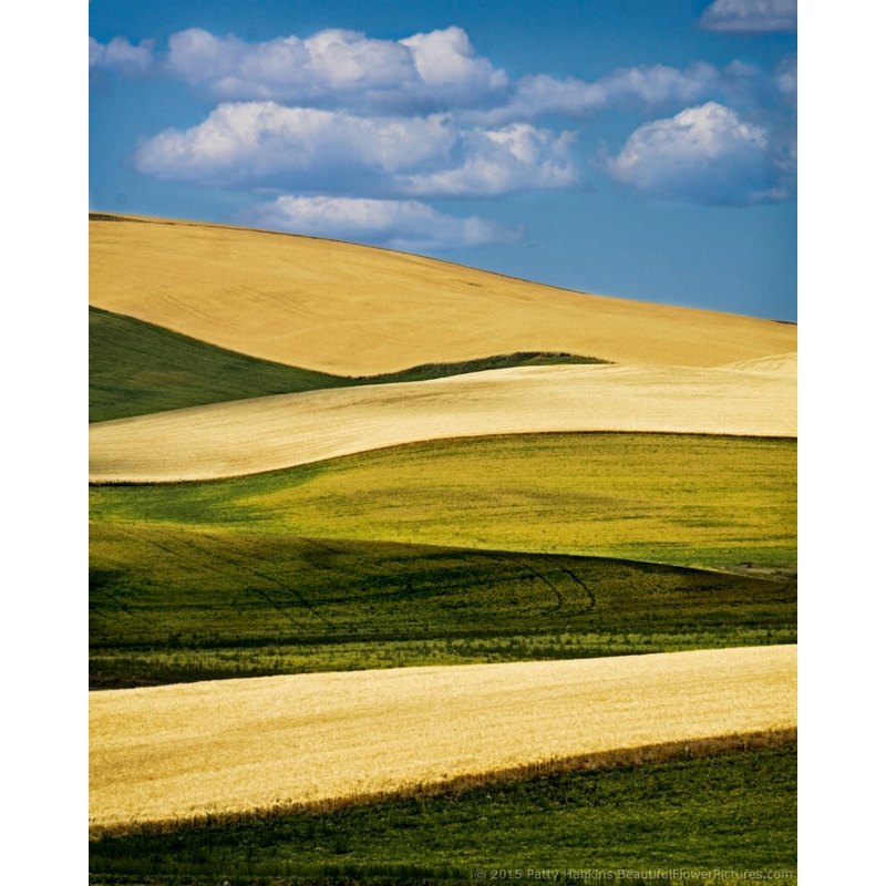 Fields in the Palouse