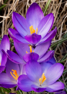 jun_2014_workshop_crocus