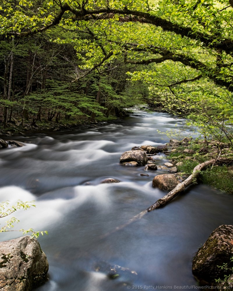 smoky_middle_prong_river_5701