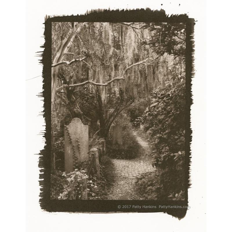 Grave-lined Path, Unitarian Cemetery, Charleston, SC Palladium Toned Kallitype